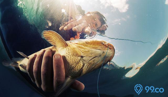 Kompilasi Umpan Ikan Mas Terbaik Paling Jitu Bisa Diracik Sendiri