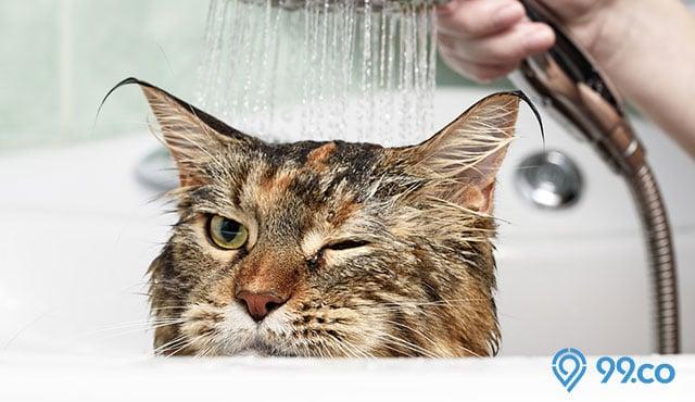 7 Cara Memandikan Kucing Yang Benar Tanpa Berontak