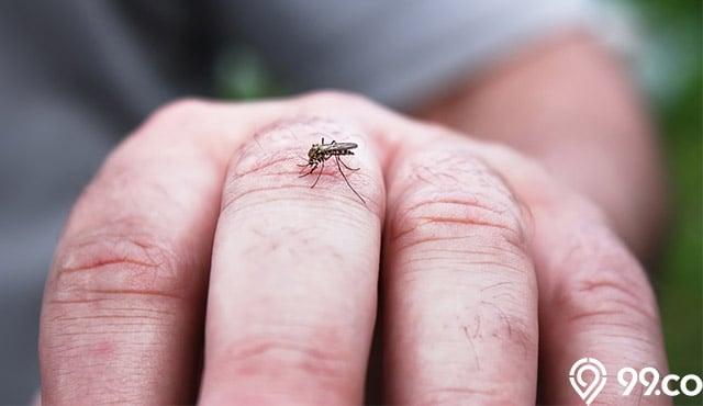 obat nyamuk alami
