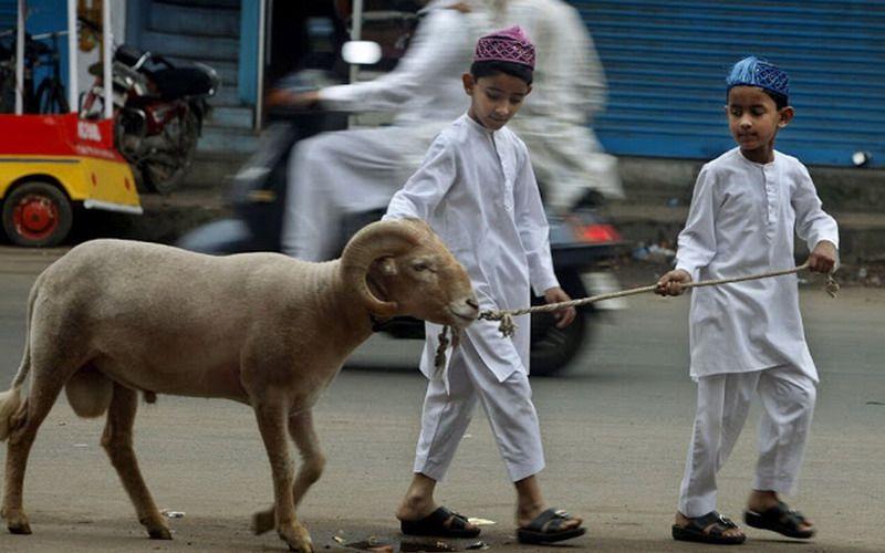syarat berkurban bagi orang muslim