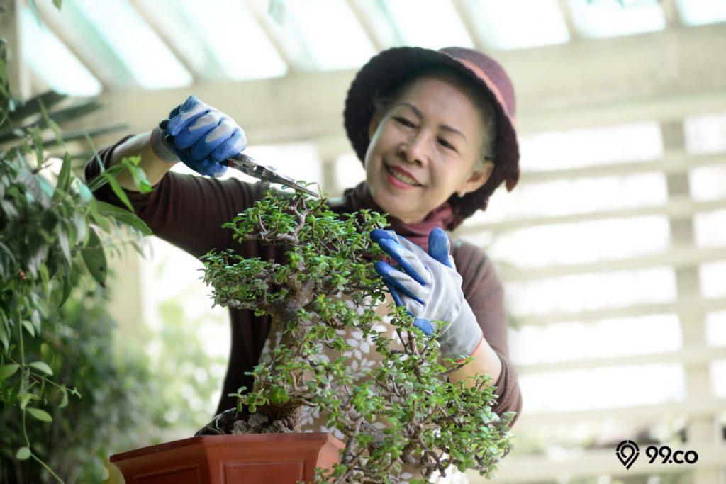 tanaman bonsai dapat mengurangi stres