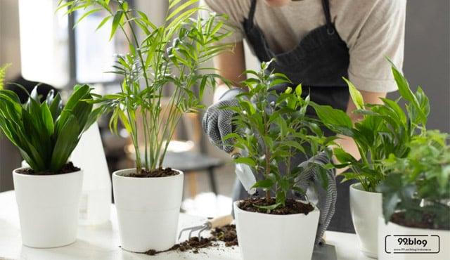 merawat tanaman indoor