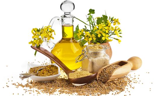 minyak mustard obat asma