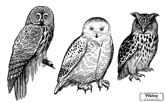 Mitos Burung Hantu Di Atap Rumah Benarkah Pertanda Kematian