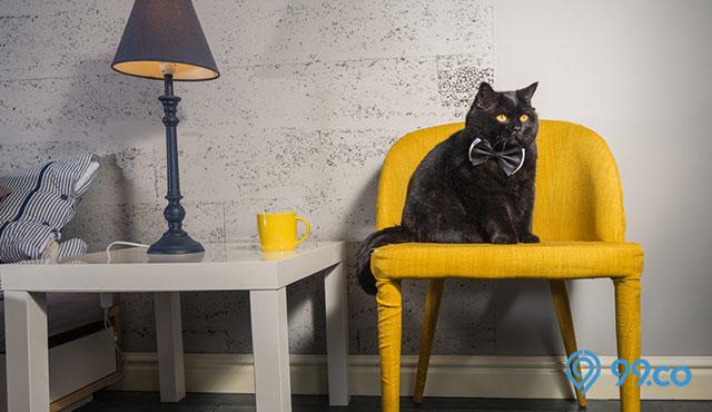 10 Mitos Kucing Hitam di Berbagai Negara. Indonesia Paling Banyak!