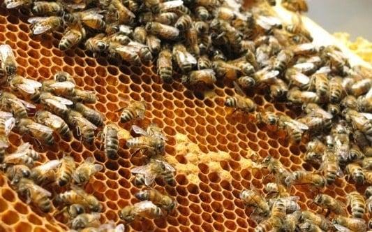 modal awal budidaya lebah madu