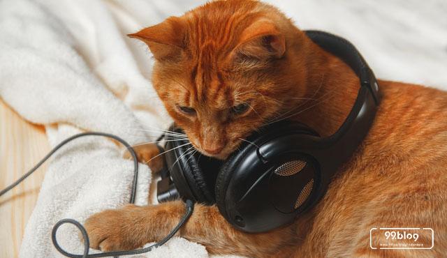 cara menenangkan kucing dengan musik