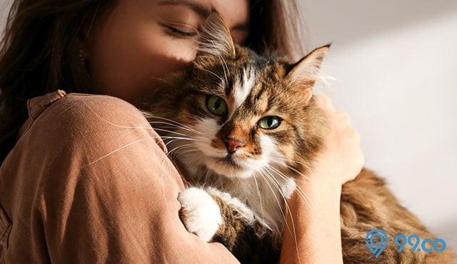 30 Nama Kucing Betina Jantan Yang Mudah Diingat Menggemaskan