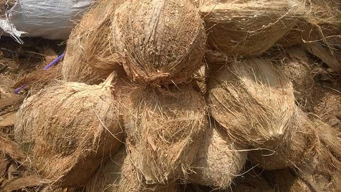 masakan santan kelapa tua