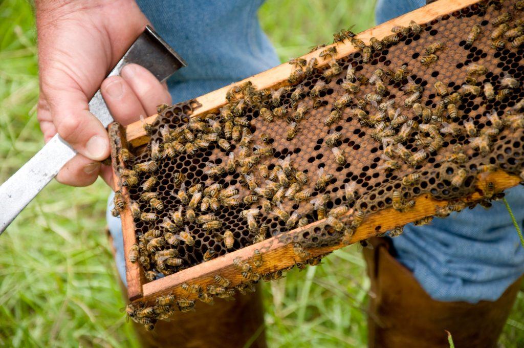 pemeliharaan lebah madu