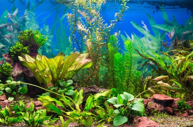 Mudah dan Murah! Ini 12 Cara Membuat Aquascape Sendiri di ...