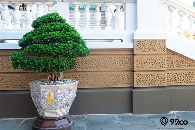 pohon banyan atau bonsai kimeng