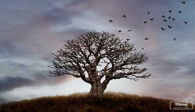 pohon berhantu