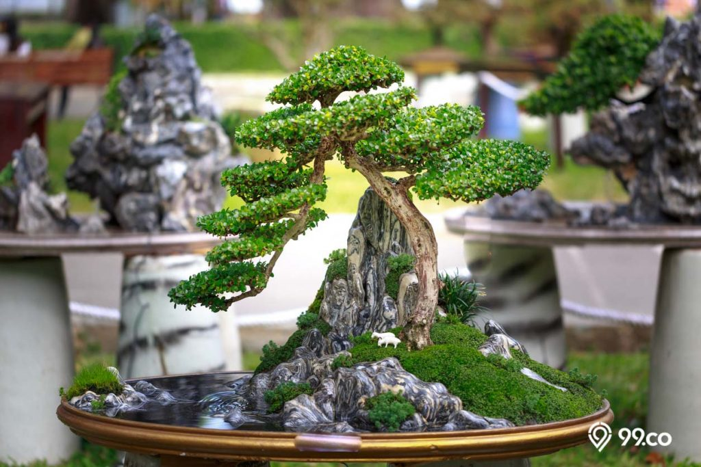 pohon bonsai hias
