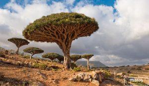 pohon teraneh di dunia