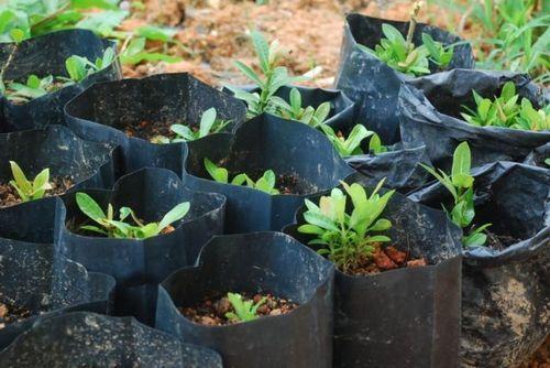 polybag tanaman