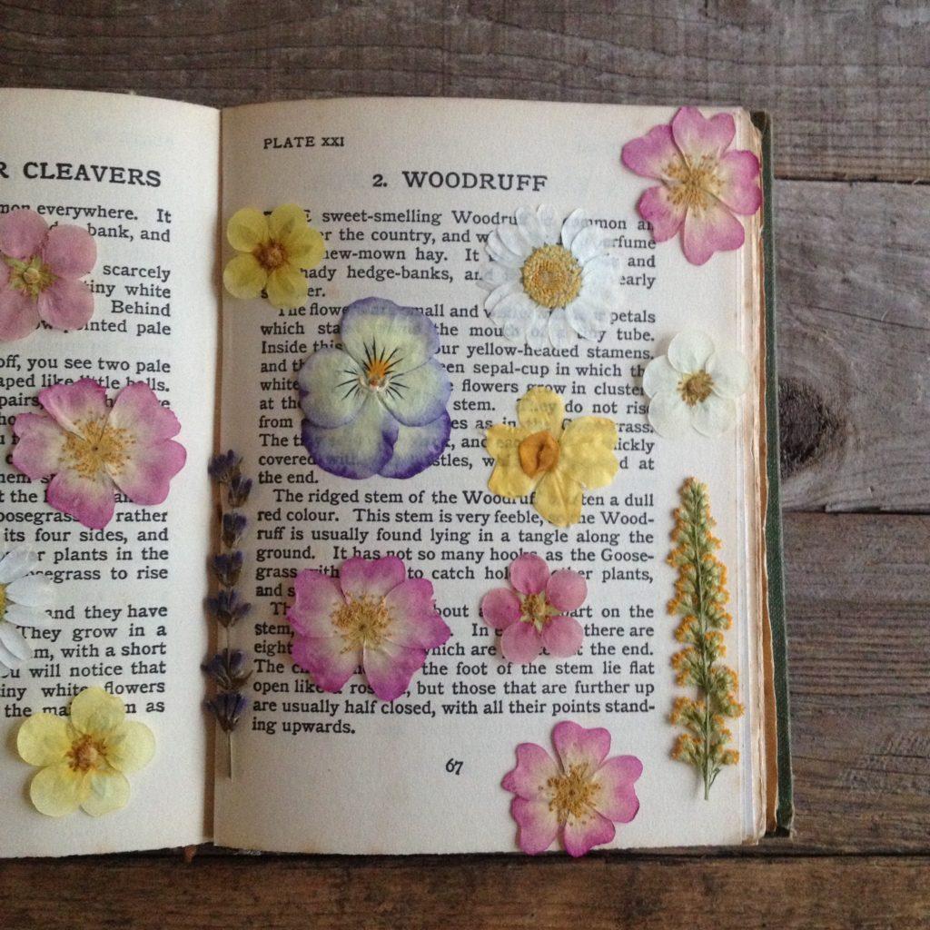 cara mengeringkan bunga dengan buku