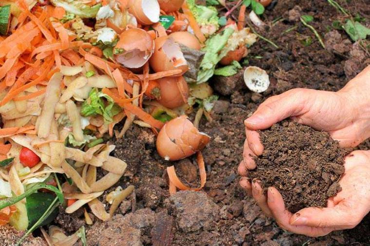 mengolah pupuk kompos dari limbah rumah tangga