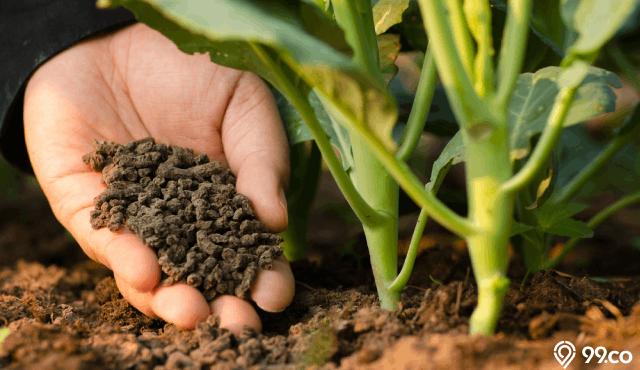 pupuk organik alami dapur