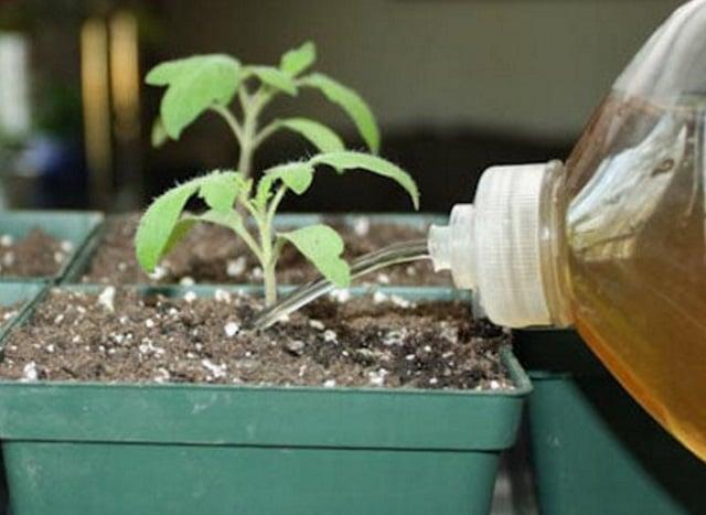 wadah pupuk organik cair
