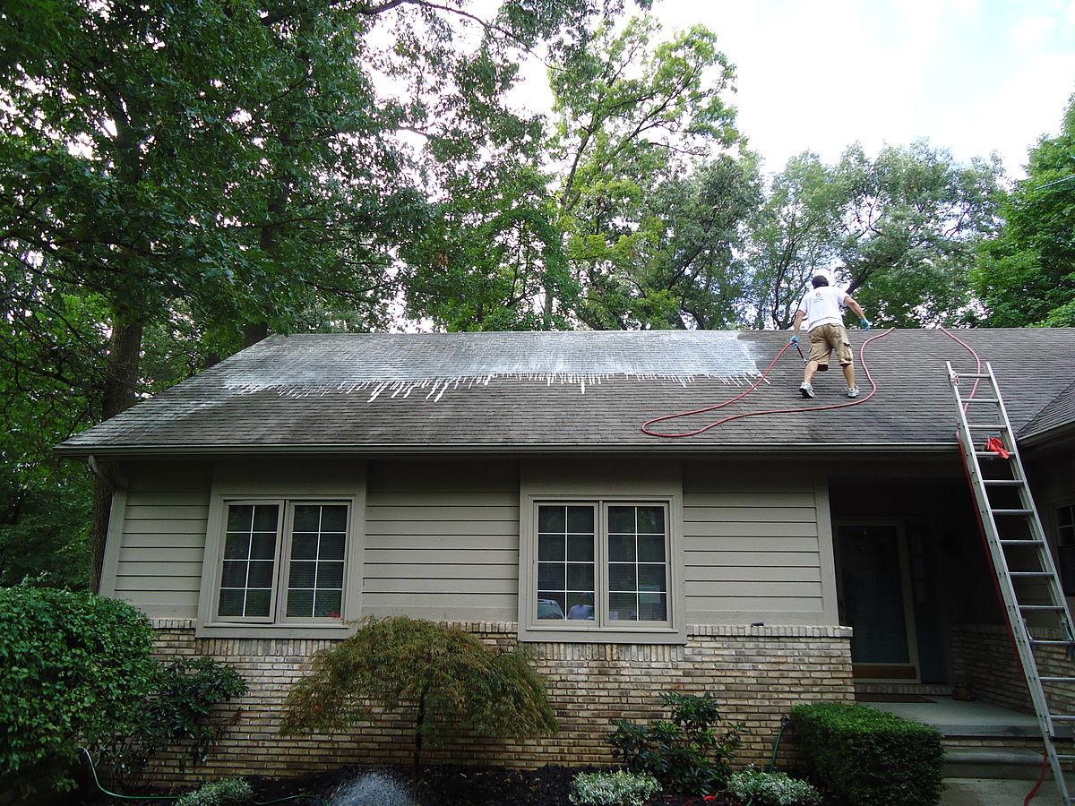 ranting pohon genteng rumah