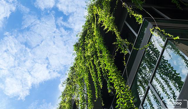 9 Tips Esensial untuk Membuat Roof Garden. Mudah dan Praktis!