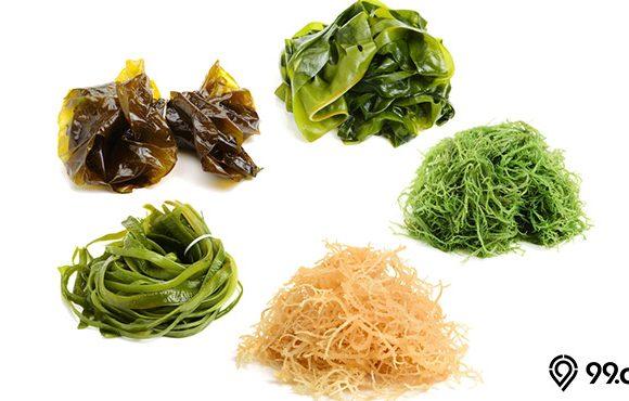 makanan rumput laut
