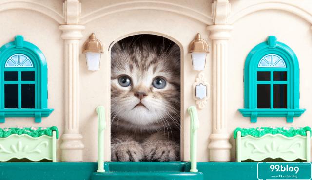 rumah kucing