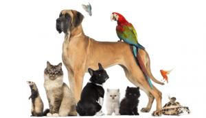 hewan peliharaan termahal