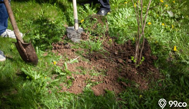 cara menguburkan kucing