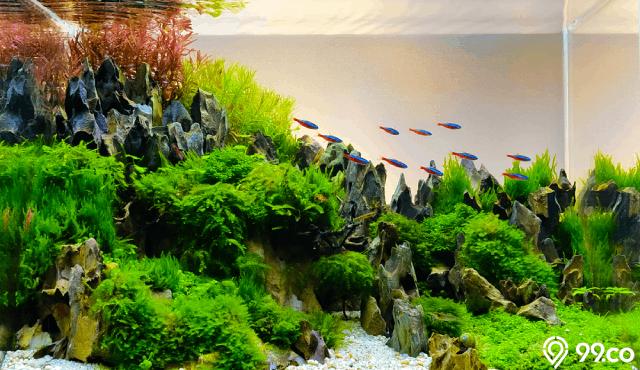 DIY cara membuat aquascape