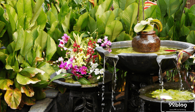 Panduan Feng Shui Tanaman di dalam Rumah Agar Manfaatnya Maksimal