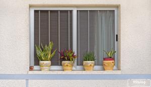 tanaman depan rumah menurut primbon jawa
