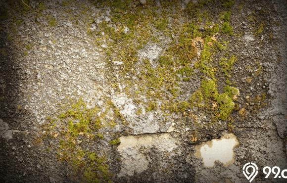 cara menghilangkan lumut