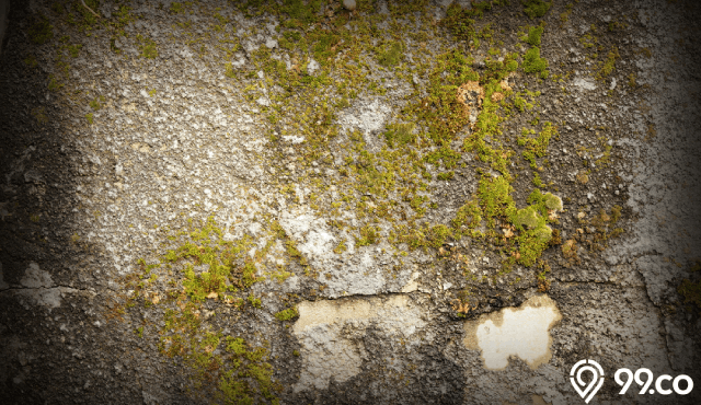 Ampuh! Ini 7 Cara Menghilangkan Lumut Menggunakan Bahan Rumahan