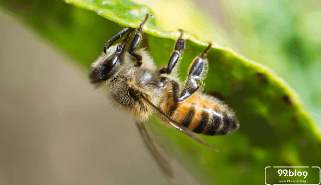 Selain Tawon Ndas, Ini 7 Serangga Mematikan Paling Berbahaya di Dunia!
