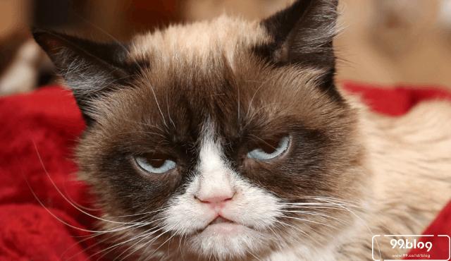 20 Foto Binatang Mirip Selebritis dan Tokoh Dunia ini Beneran Bikin Ngakak. Mana yang Paling Mirip?