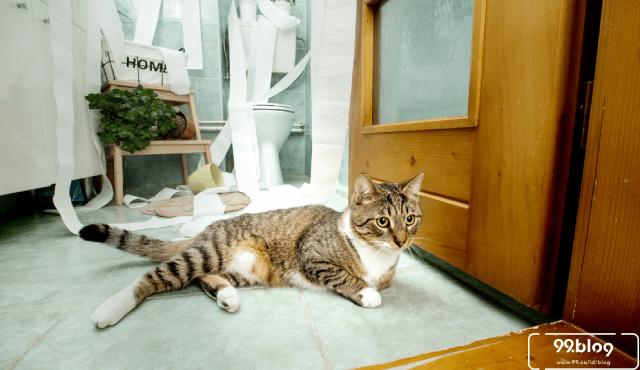 Beginilah Cara Mengetahui Tanda Tanda Gempa Bumi dari Perilaku Kucing