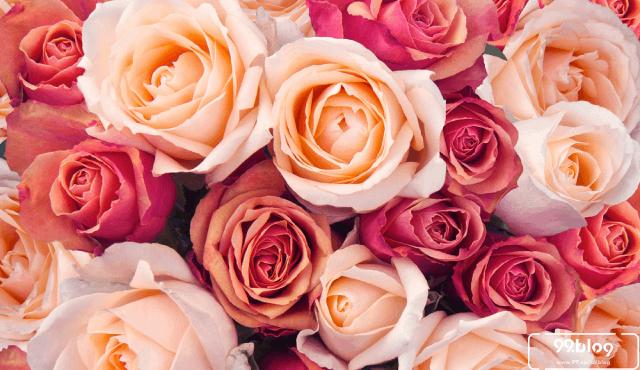 7 Tips Menarik Pasangan dengan Bunga Persik Sesuai Feng Shui Jodoh