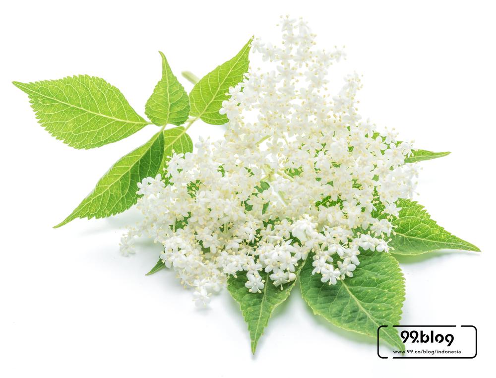 bunga yang bisa dimakan
