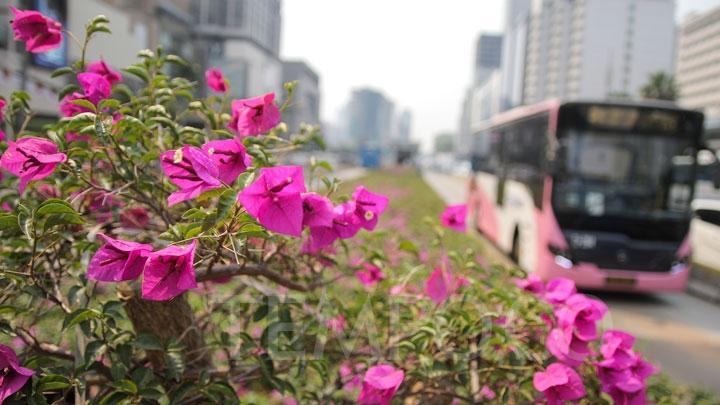 bunga kertas di jalan
