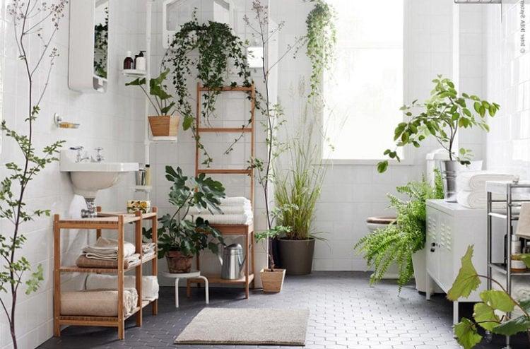 tanaman hias dalam rumah