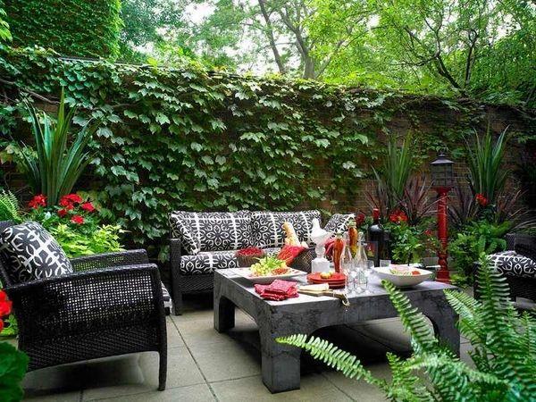 kebun dengan hiasan tanaman rambat