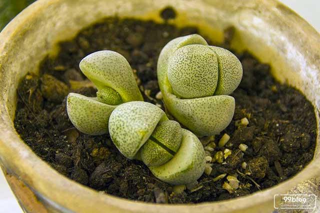 tanaman aneh