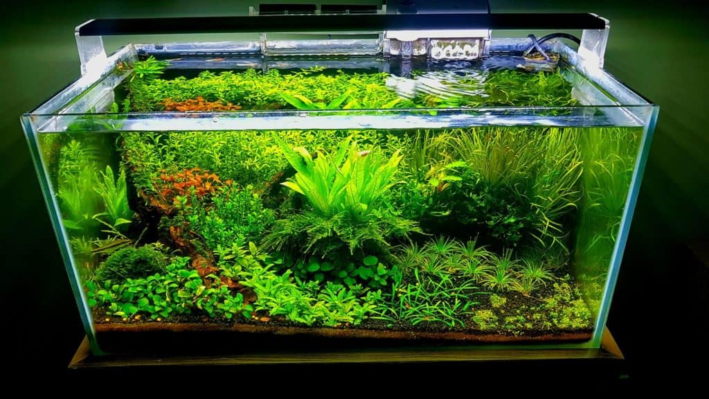 Mudah Dan Murah Ini 12 Cara Membuat Aquascape Sendiri Di Rumah