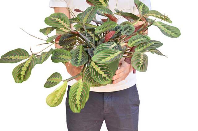 tanaman dalam ruangan