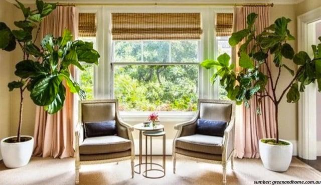 7 Tanaman Daun Lebar untuk Percantik Suasana Rumah. Eye Candy Banget!