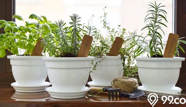 25 Tanaman Herbal Obat Keluarga Di Halaman Rumah