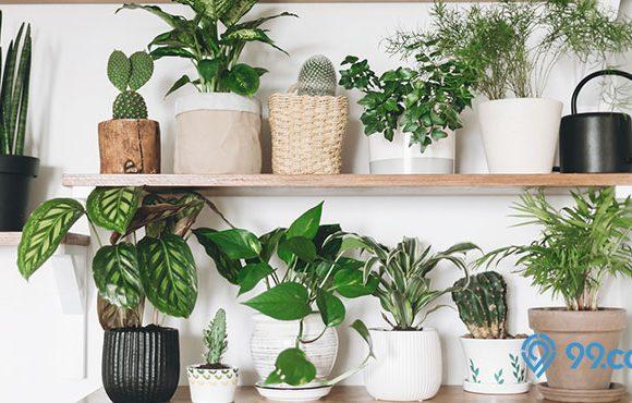 tanaman hias dalam pot