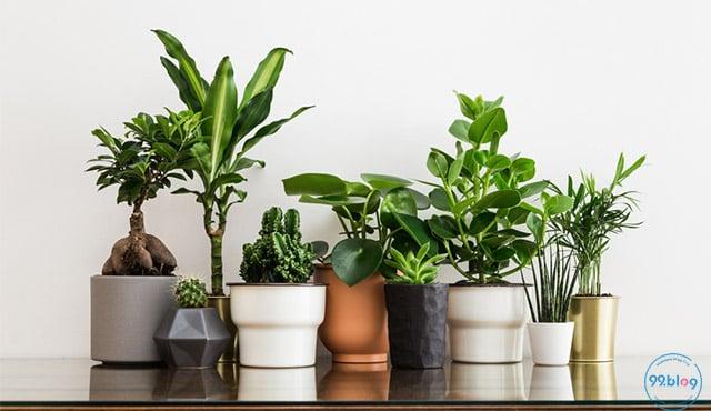 tanaman hias depan rumah